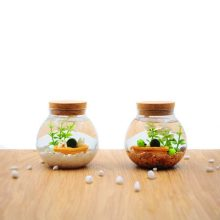 Marimo幸福海藻球微观玻璃瓶,创意迷你水培植物