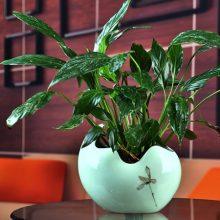 陶瓷绿萝水培花盆摆件,花盆中的鱼缸