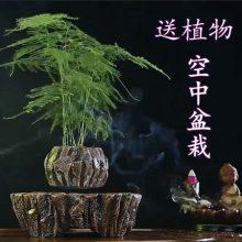 黑科技磁悬浮盆栽摆件,净化空气也要与众不同