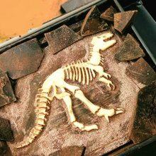 考古恐龙化石巧克力,能吃能玩的考古巧克力