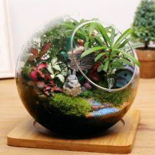 苔藓微景观玻璃小盆栽,小小的景观大大的世界