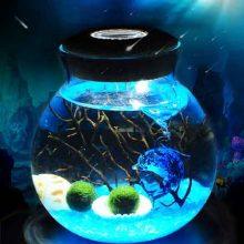 微景观海藻生态瓶夜灯,一款DIY水培植物盆栽球藻